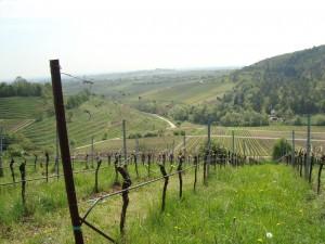 The view south from Kastanienbusch Vineyard