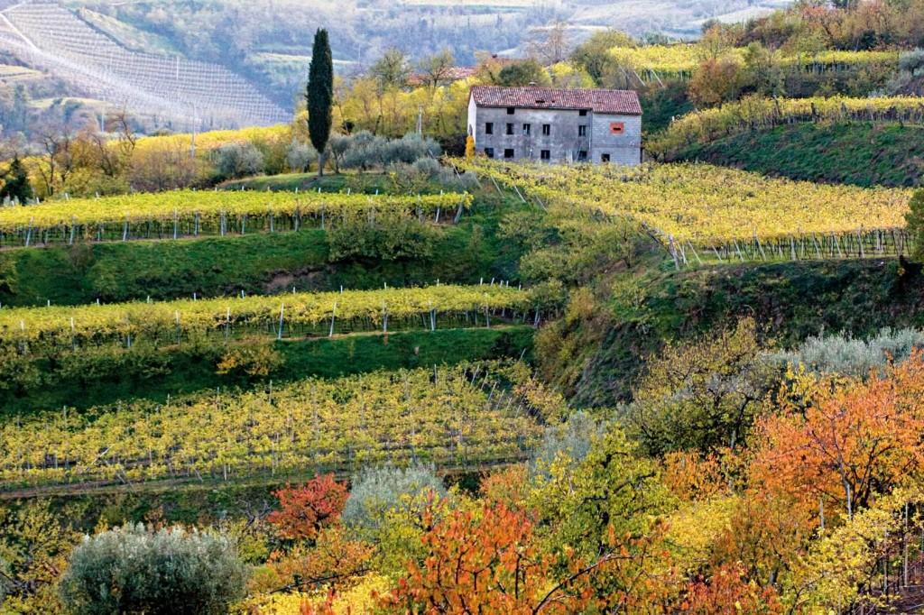 Soave landscape.  Photo Consorzio vini Soave