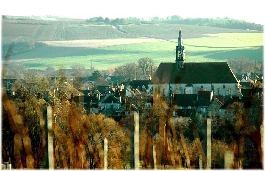 Chablis-vineyards-bivb-photo
